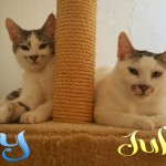 Juki e Rey