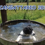 cangattario-2017