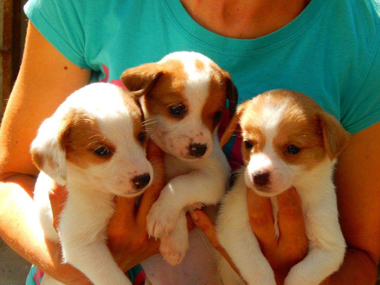 Tre cuccioli taglia piccola