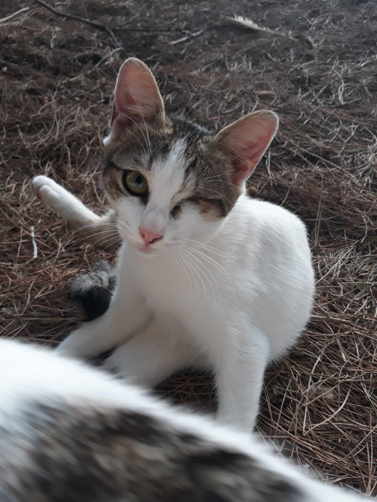 SOLE  gattina    ADOZIONE DEL CUORE